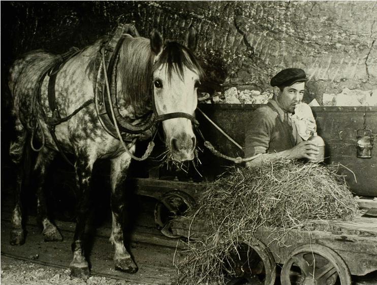 Konie w służbie salinarnej