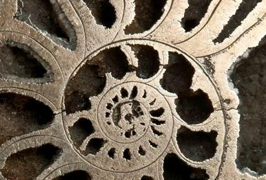 Wystawa: Od Łodzika do Amonita – życie utrwalone w skałach