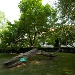 ogród żupny (5)