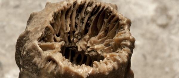 600x262 fragment koralowca wtopiony w sól