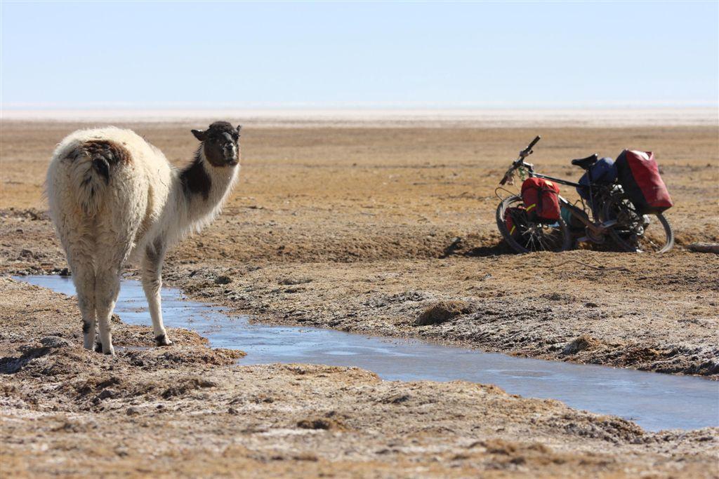Niezwykła podróż z solą